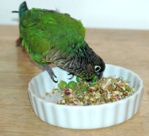 Excellent Nutrition Made Easy Best Bird Food Ever