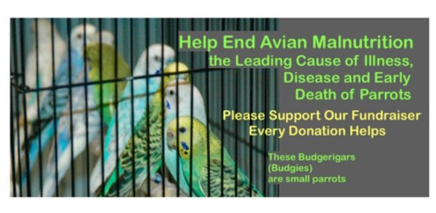 GoFundMe Support Humane Exotic avian nutritional Research